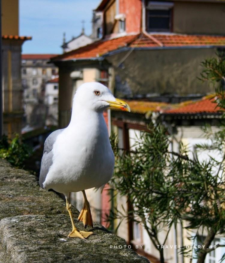 Gabbiano a Porto