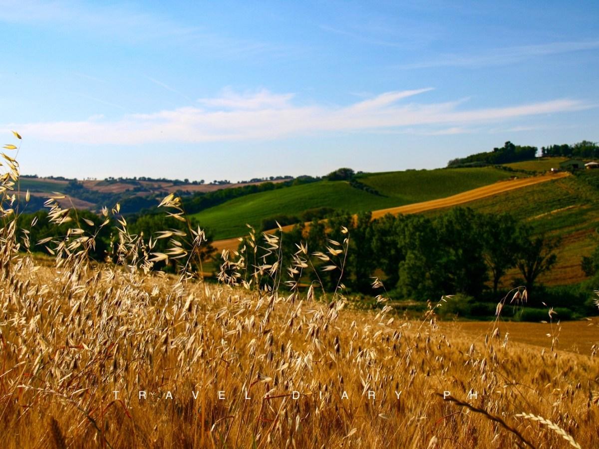 Panorama tra le colline dei Castelli in aria di Arcevia
