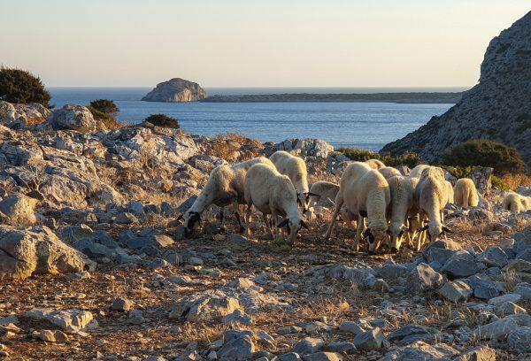Abitanti insoliti di Levitha, isola disabitata della Grecia