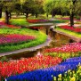 Keukenhof A Haven Of Tulips In Amsterdam The Netherlands