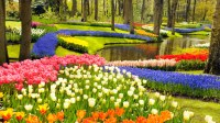 Keukenhof, A Haven of Tulips in Amsterdam, The Netherlands ...