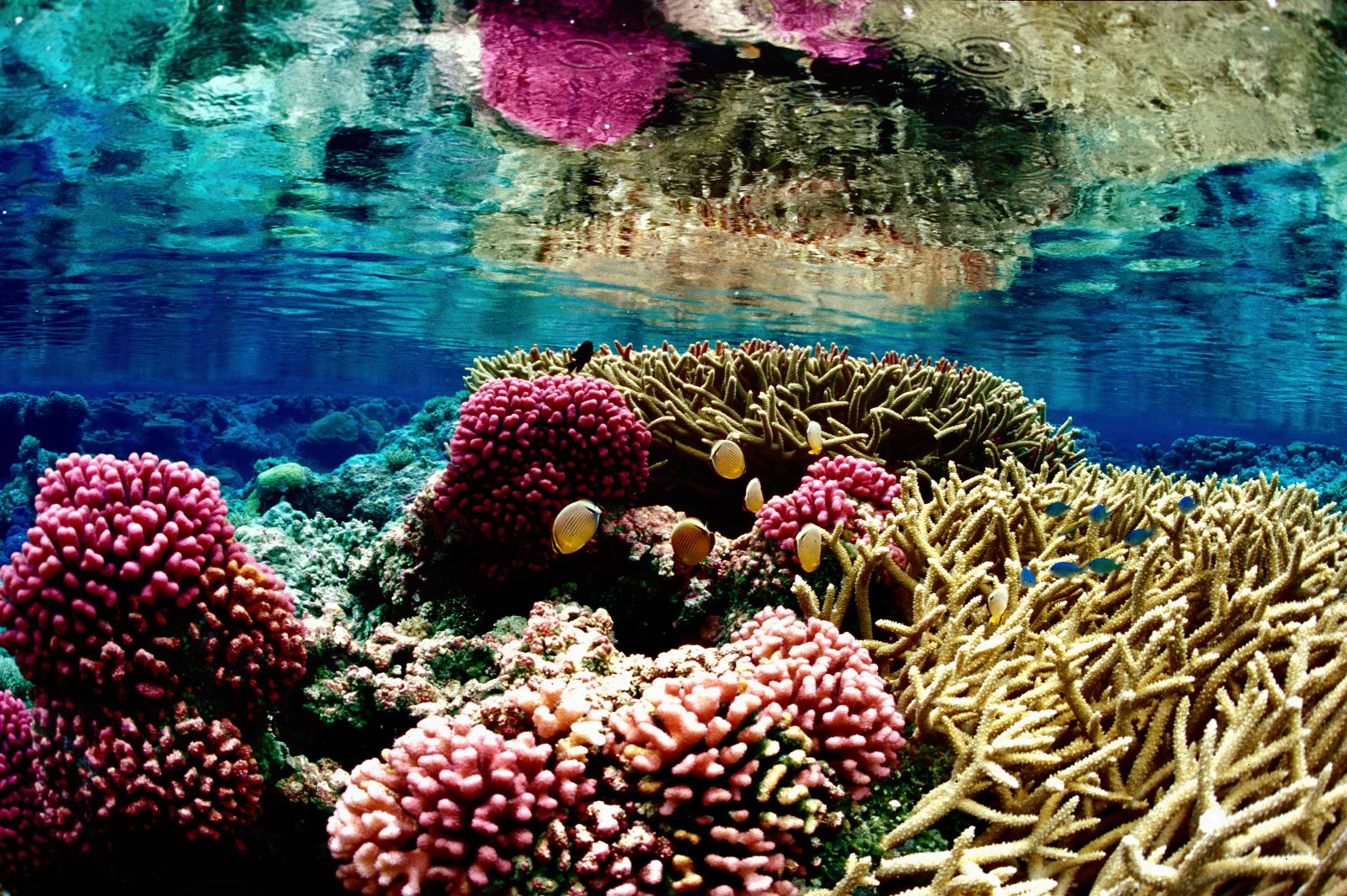 Great Barrier Reef The Largest Coral Reef Tourism In The
