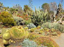 Desert Botanical Garden, Phoenix, Central Arizona ...
