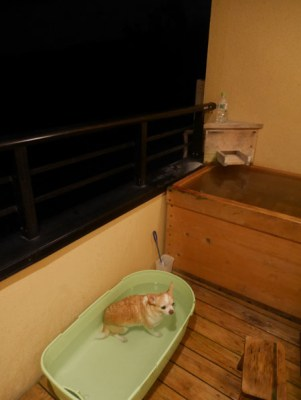 プチホテルアニマーレプレミアム犬と温泉