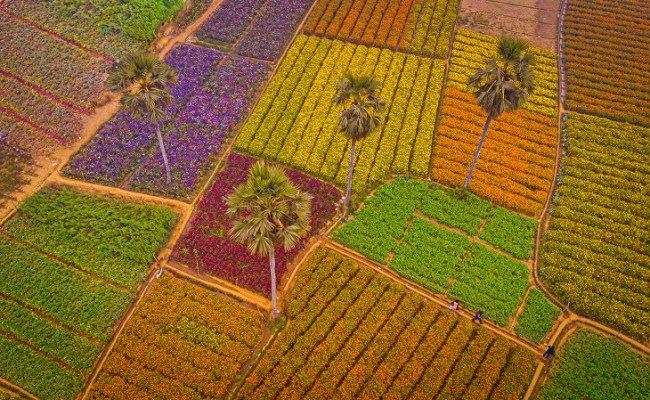 Khirai flower garden