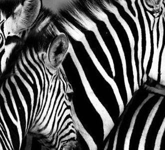 Planeando un safari