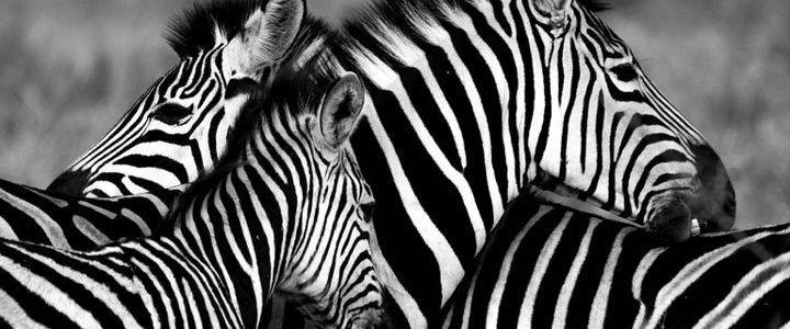planeando un safari cabecera