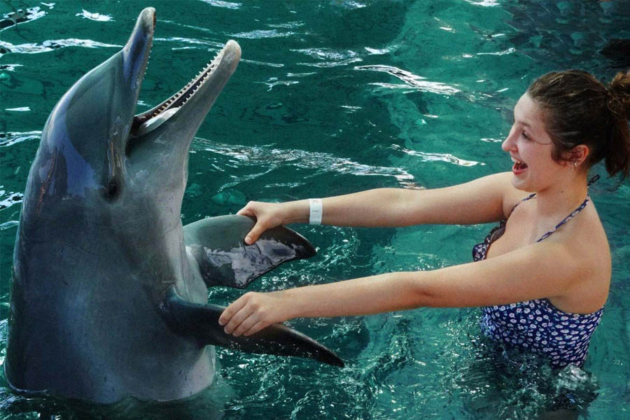 Swim with The Dolphins in Cozumel Mexico