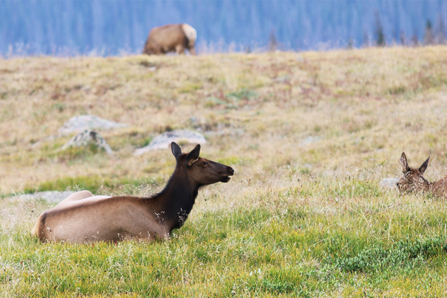 Abundant wildlife at the Moraine Park Campground