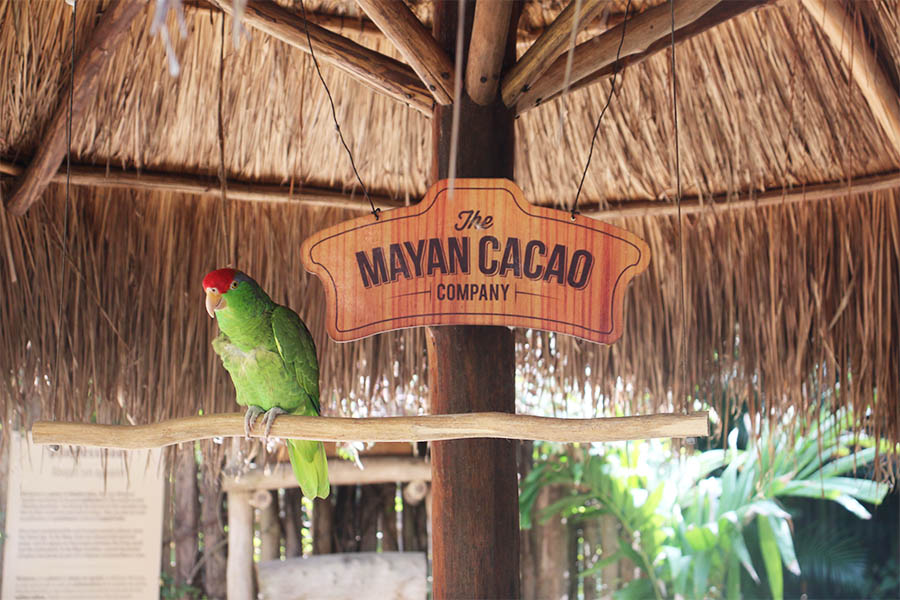 Mayan Chocolate Factory