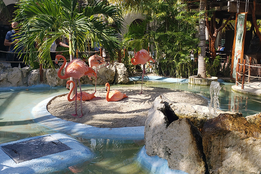 Flamingos at the cruise terminal in Costa Maya
