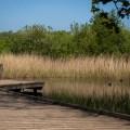 Zwin Nature Parc