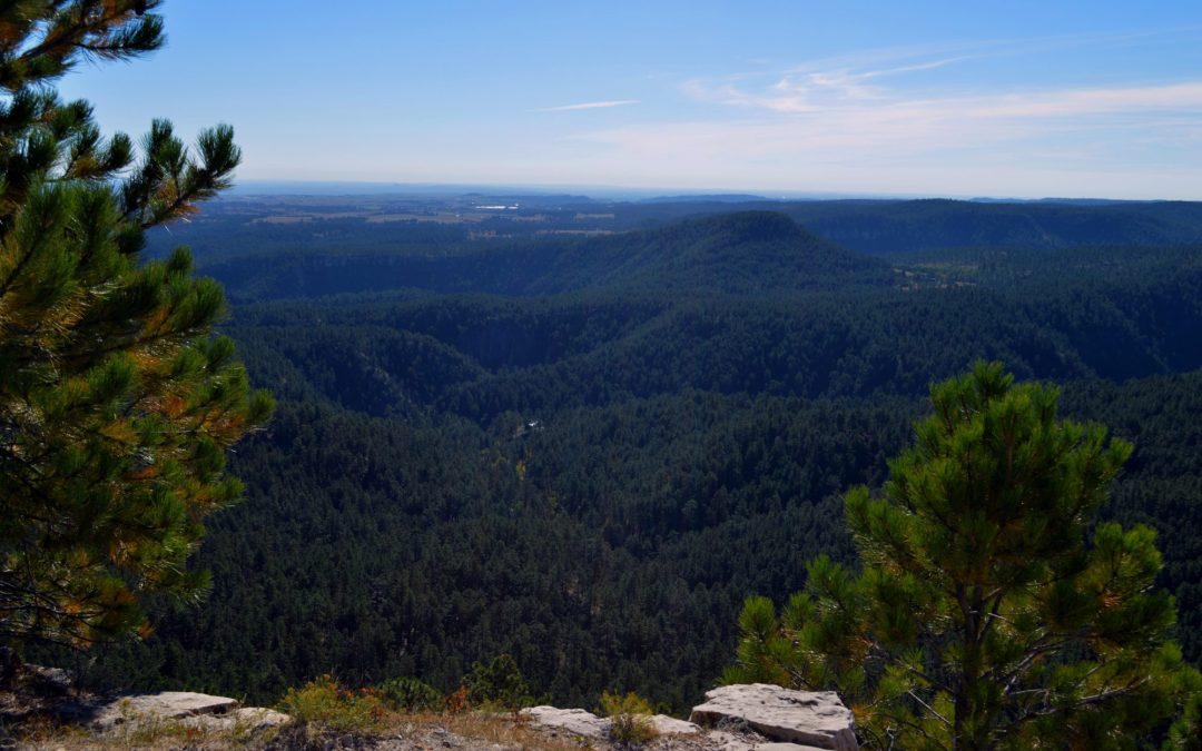 Hiking: Buzzard Trail in Black Hills National Forest, USA