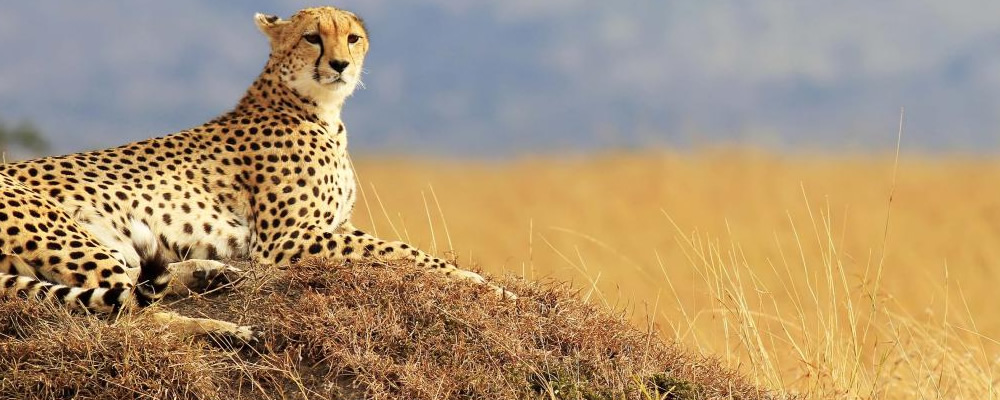 3 Day Serengeti and Ngorongoro Tour Safari in Tanzania