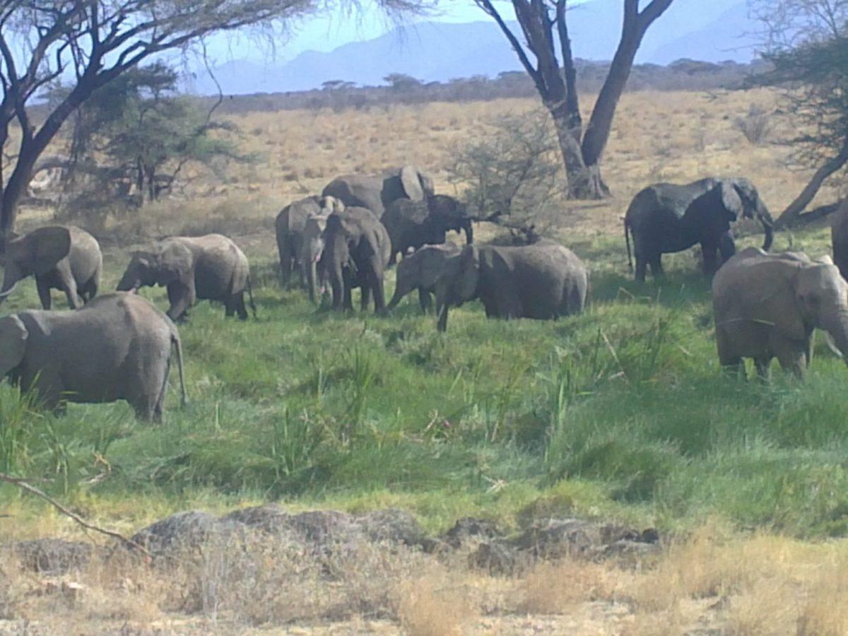 3 Days 2 Days- Masai Mara National Reserve