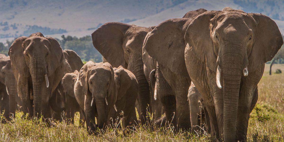 6 Days 5 Days- Masai Mara,Lake Nakuru & Samburu