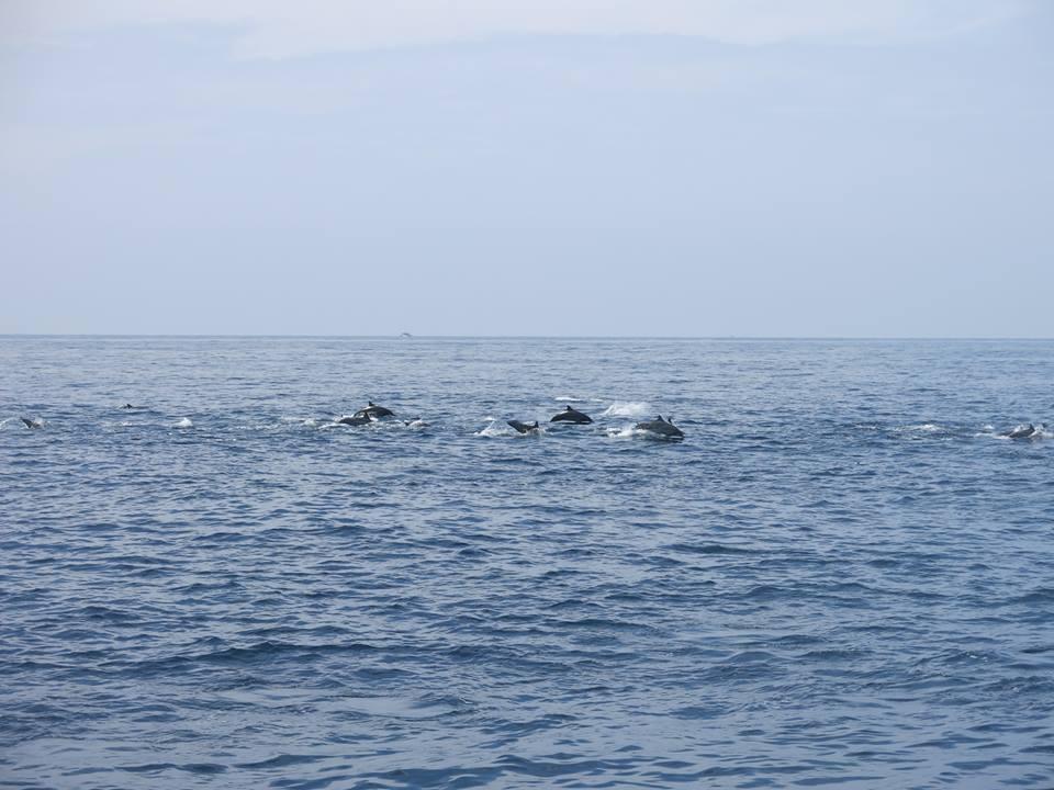 Yilan: Dolphin watching – Wushih Harbor ~ Guishan Island