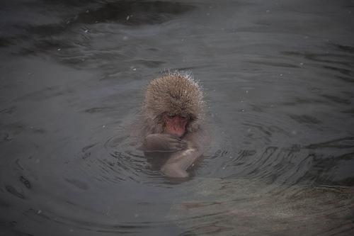 千葉県富津市にある温泉「海辺の湯」は東京湾が一望できる素敵なスポット!