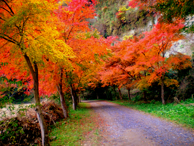 養老渓谷の紅葉が美しすぎる!おすすめのハイキングコースや交通アクセスをご紹介。