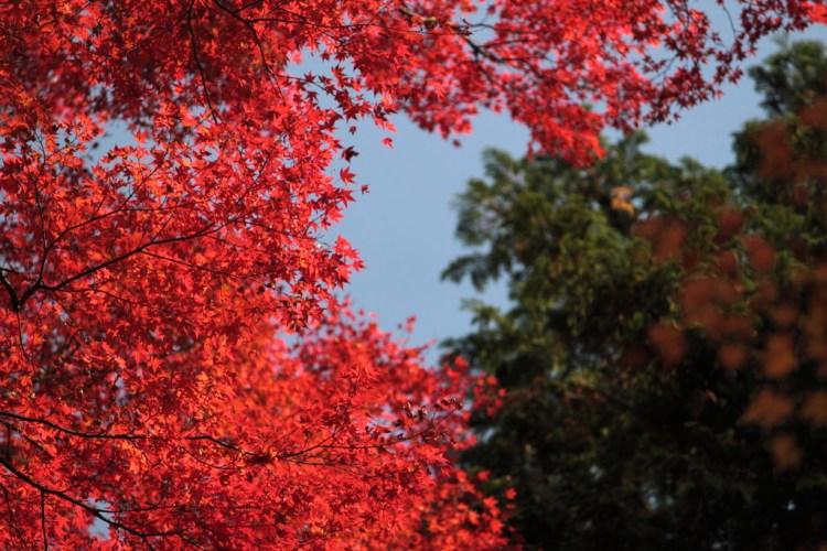 箱根の紅葉!2016年の見頃の時期は11月上旬以降。