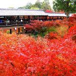 東福寺の紅葉!2016年の見頃は11月下旬から!ライトアップは東福寺塔頭の勝林寺と天得院で。