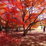 新宿御苑の紅葉!ピクニックが評判。夜のライトアップがない理由とは?