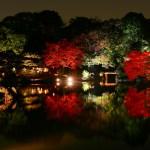 六義園の紅葉!2016年の見頃は11月下旬から。ライトアップはデートにもおすすめ!