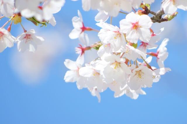 春休みは家族で旅行へ!人気おすすめスポットをご紹介!