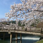 2016年も関西でお花見を楽しもう!おすすめスポットを紹介します。