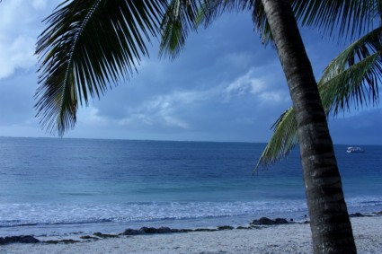 beach_palm_tree_269053