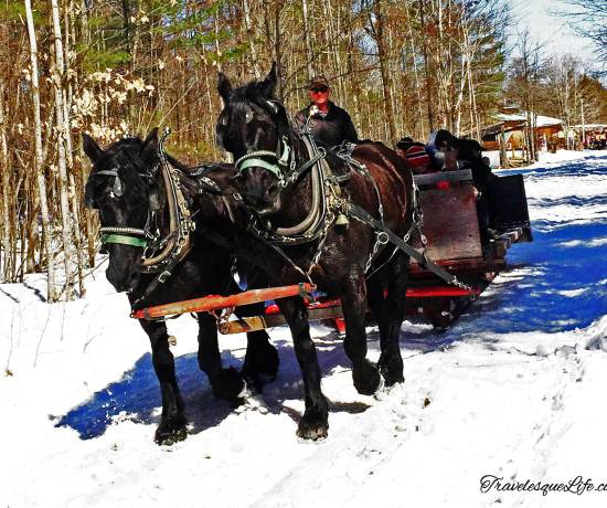 Fulton's-Horse-drawn-wagon-