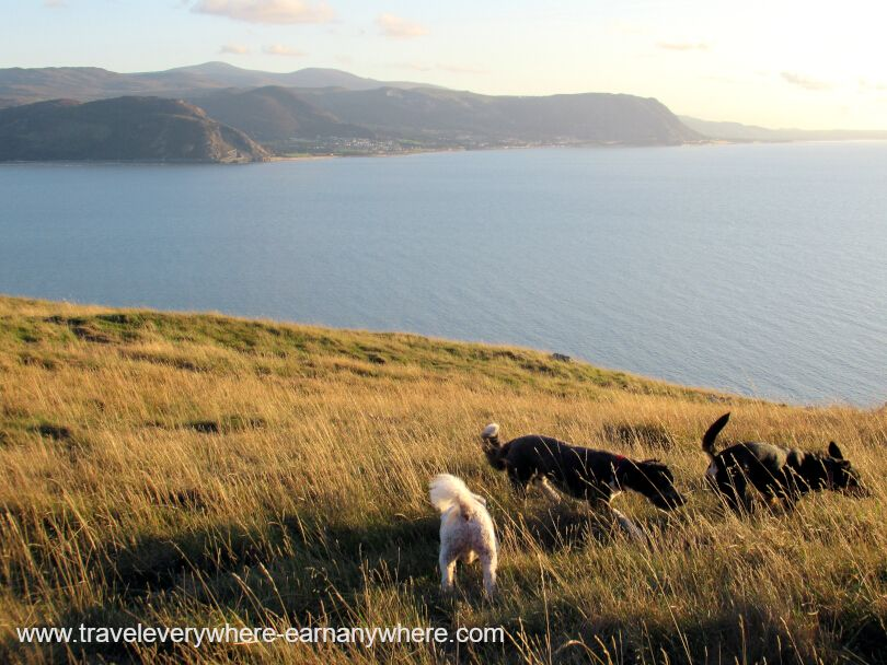 Walk the Dogs in Wales for our house sit as digital nomads