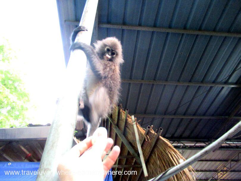 Dinner with monkeys in Penang