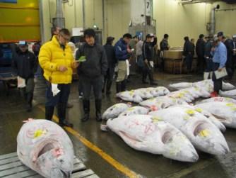 Tsukiji market 026