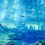 The Dubai Aquarium and Underwater Zoo, Dubai