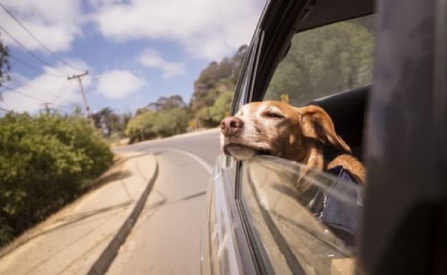 Want To Travel With Your Dog Check Our Tips And Pack