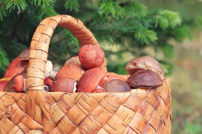 Basket with mushrooms autumn forest sun rays