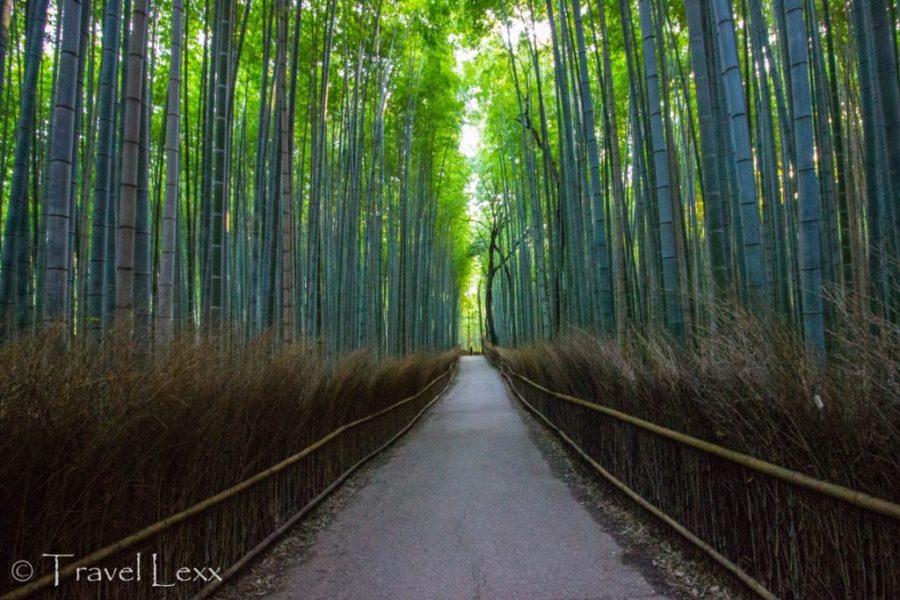 Arashiyama Bamboo Forest, Kyoto - 20 Reasons Why You Shouldn't Travel To Japan