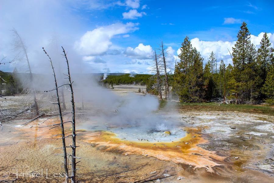 Norris Geyser Basin - 8 Reasons You Should Visit Yellowstone National Park