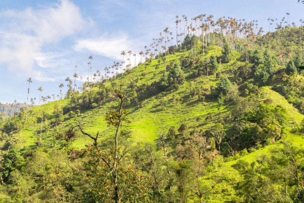 Best hikes in the world - Valle de Cocora