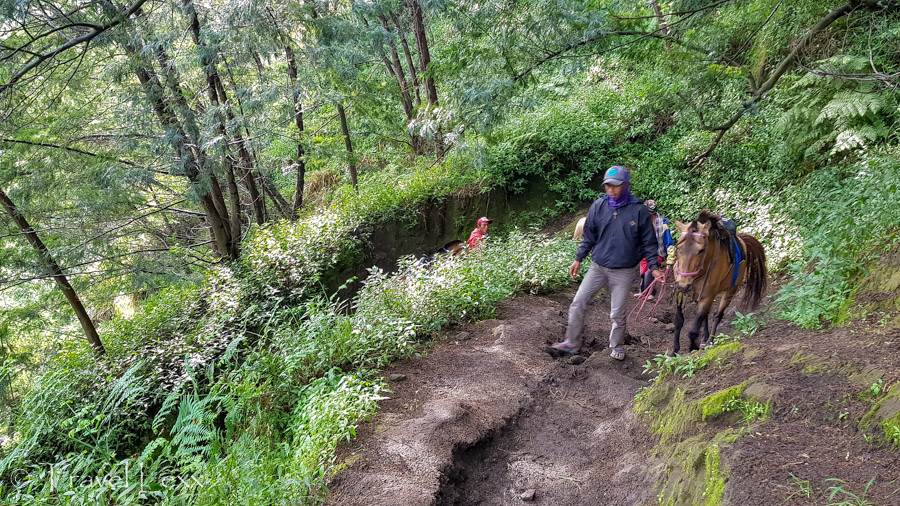 Trail down to the Sea of Sand from Cemoro Lawang