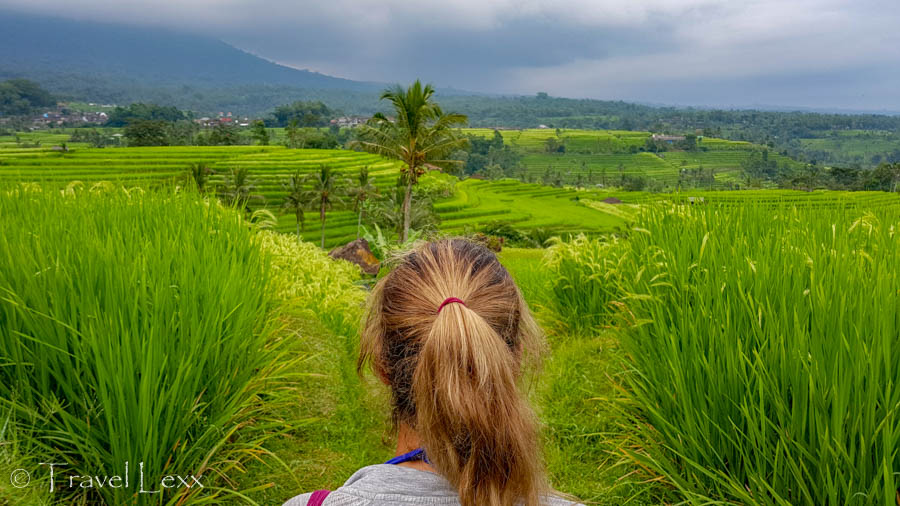 A woman looking out onto green rice fields