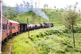 Train trip through tea country in Sri Lanka