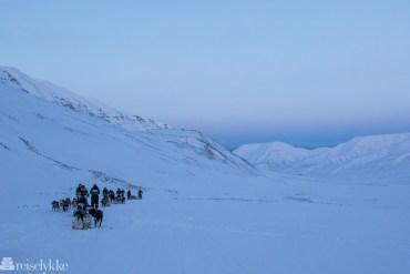 Dog sledding Svalbard