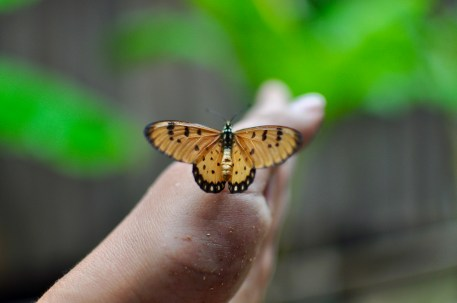 This butterfly stayed with me for an hour!