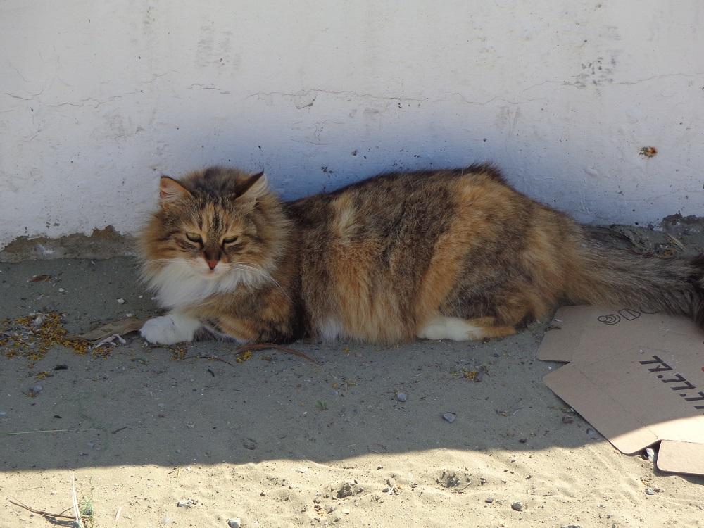 Sleepy cat looking for some shadow in Larnaca