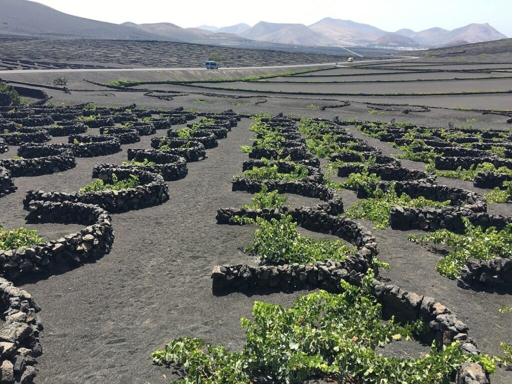 The incredible vineyards of La Geria should be on your what to do list in Lanzarote.
