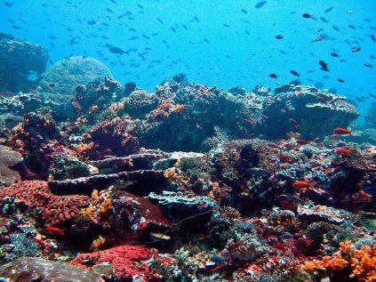 Nusa Lembongan Reef