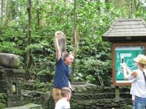 Monkey Getting the Banana