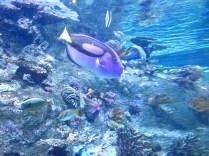 Blue fishy